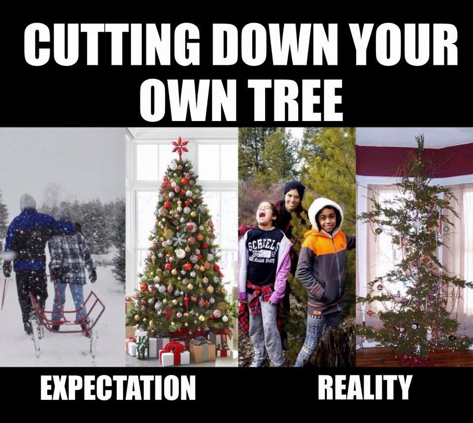 cutting tree down expectation vs reality