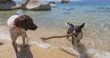 Tahoe is one of the most dog-friendly places to vacation!