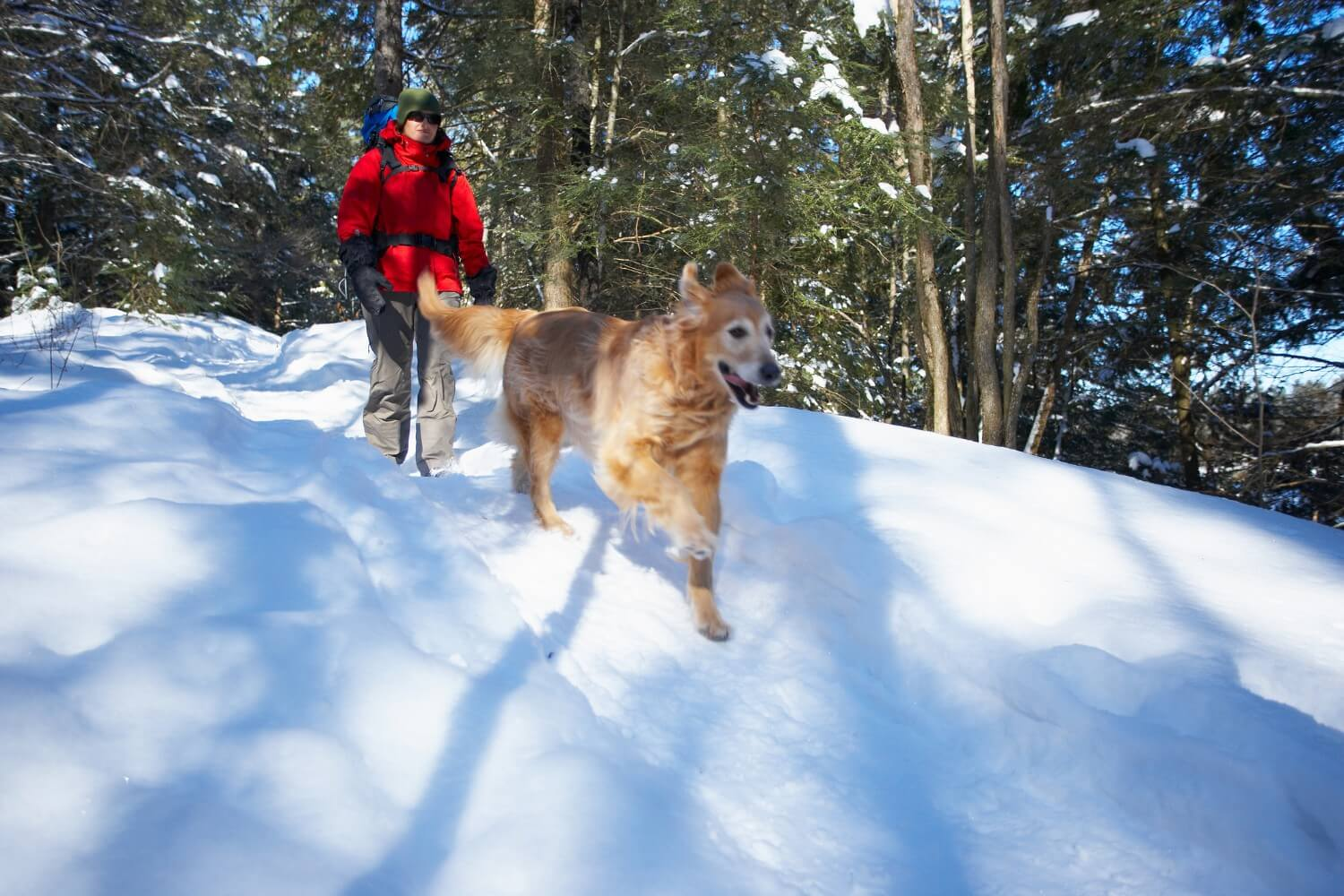snowshoeing with dog (1)