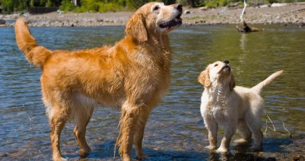 two dogs on lake