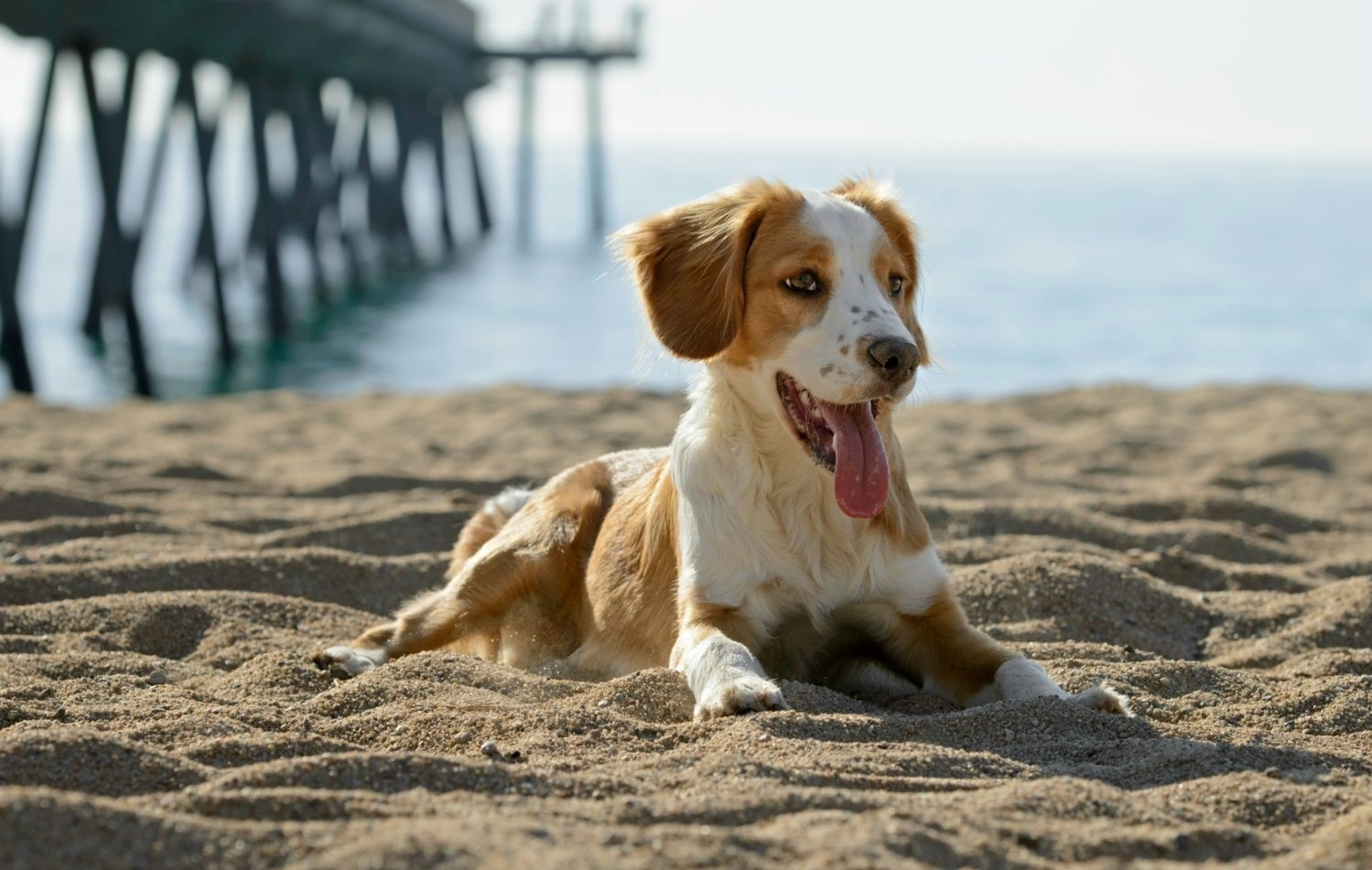 Dog laying on sand at the beach