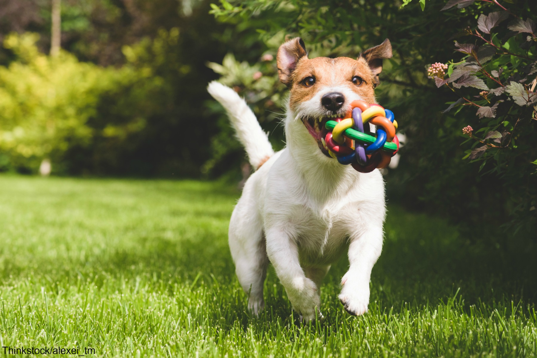 Dog with colorful ball at park