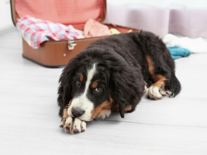 Cute funny dog lying on floor near open suitcase at home