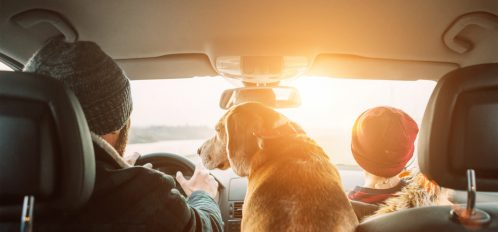 dog riding in car on a road trip